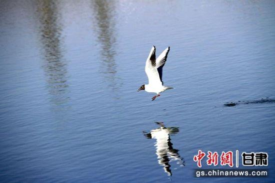 图为一只飞翔的鸥鸟在水面投下倒影。