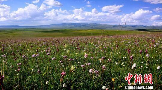 图为夏日的甘南草原。(资料图) 张勇 摄