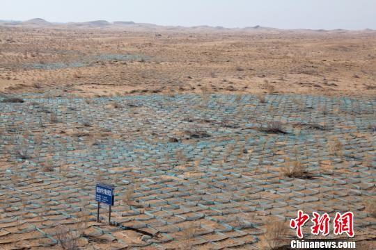 临泽县平川镇由外到内形成了荒漠植被保护区,绿洲向外延伸了近14公里。 赵学荣 摄