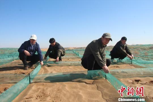通过多年的探索,临泽县在治沙领域逐步掌握了生物治沙、工程治沙等多种治沙方式。 赵学荣 摄