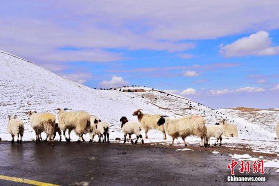图为祁连山雪后美景。 武雪峰 摄
