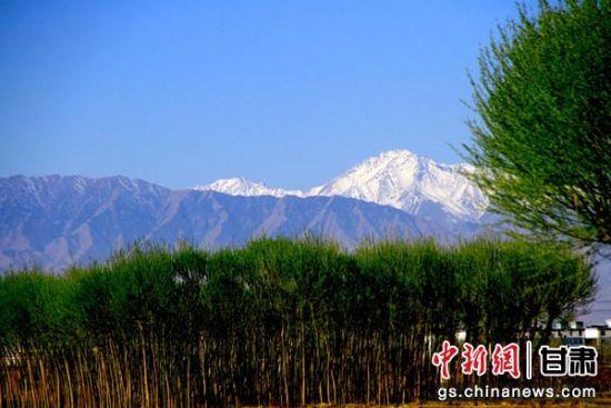 蓝天、雪山、青山、绿树构成一幅春日别样美景。