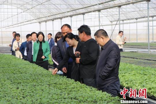 图为农林业领域的专家考察甘肃民勤蜜瓜产业发展。 马爱彬 摄