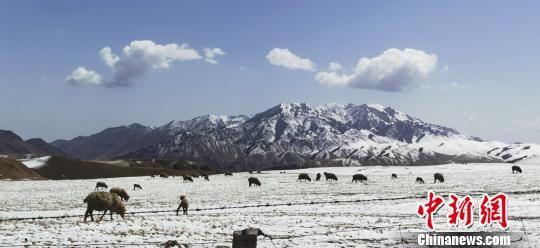 图为雪后草原景色。 武雪峰 摄