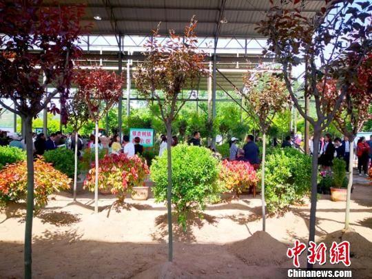 图为苗木展区,客商和游客络绎不绝。 高展 摄