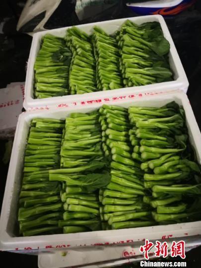 """图为""""整装待发""""的蔬菜。(资料图)榆中县农业局供图"""