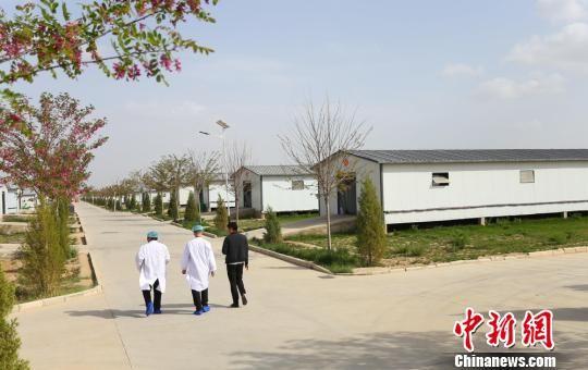 甘肃省庆阳市环县中盛公司万只基础母羊繁育场内干净整洁,实行现代化管理。 高展 摄