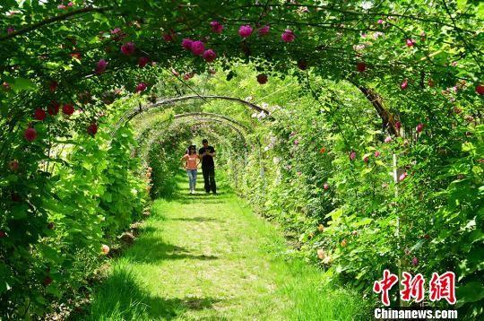 游客在后官寨镇中心村百卉源赏花游玩。 李泳宏 摄