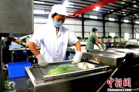 图为文县各乡镇民众正在山野菜扶贫车间进行封装。李智谋 摄