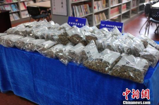 图为兰州海关首次查发的国际快件走私毒品大麻。兰州海关 供图
