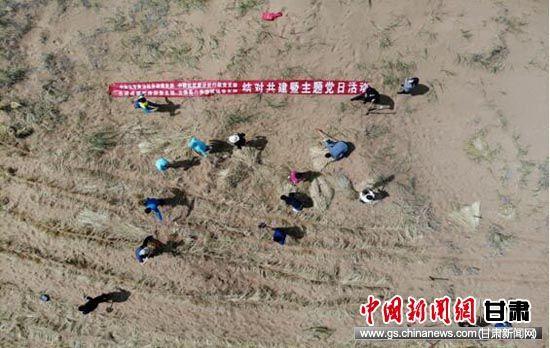图为结对共建支部党员在戈壁沙漠开展压沙。杨艳敏 摄