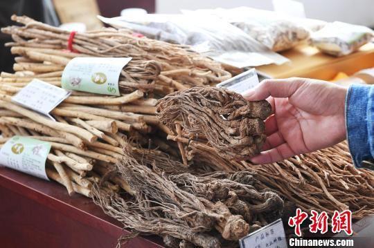 图为2018年10月,甘肃张掖市民乐县中药材博览会上的中药材。(资料图) 杨艳敏 摄