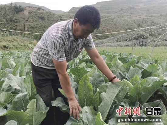 种植蔬菜给漳县武阳镇柯寨村村民带来了新希望,图为柯寨村村民在种植花菜的田地里干活。(资料图)