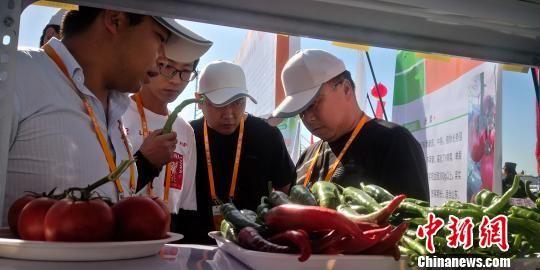 图为客商交流蔬菜新种。 魏建军 摄