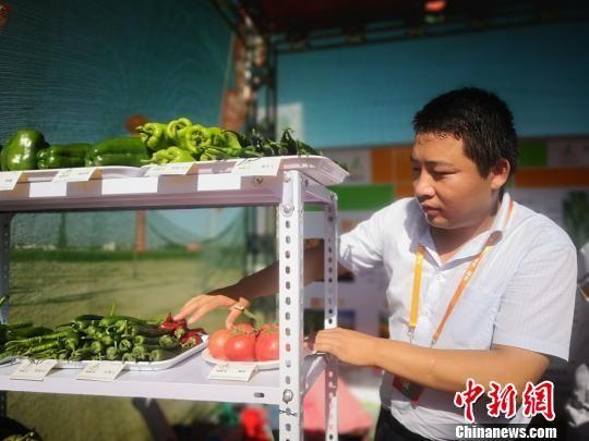 图为甘肃省敦煌种业集团工作人员摆放最新培育的蔬菜品种。 魏建军 摄