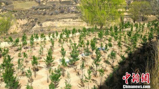 长庆油田采油二厂三年累计种植树木14.53万株、草坪3.54万平方米,绿化油区生产场站6.3万亩。 李雅林 摄