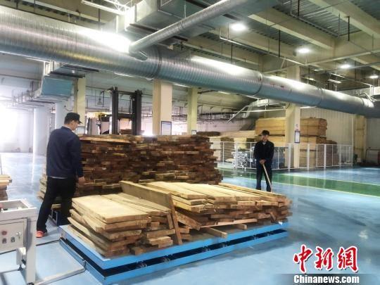 兰州新区综合保税区新优联进口木材加工项目主要利用从俄罗斯、白俄罗斯、新西兰等国家进口的樟子松等板材,在综合保税区内加工成木线条、装饰板后销往国内国际市场。 徐雪 摄