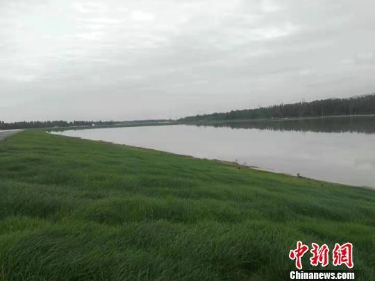 图为月牙泉恢复补水工程周边绿草如茵。 李世珠 摄