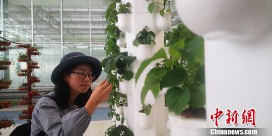 图为嘉宾观摩蔬菜新品种。 魏建军 摄