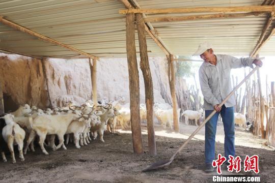 马换学正在清理羊圈。 盘小美 摄