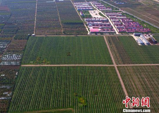 航拍平凉市境内一苹果种植基地。(资料图) 钟欣 摄