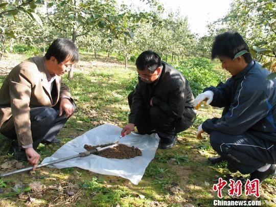 图为技术人员在果园对土质进行化验。(资料图) 钟欣 摄