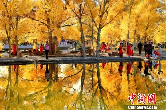 2018年10月下旬,酒泉市金塔沙漠胡杨林景区叶片金黄,在湛蓝的天空下,恍若仙境。(资料图) 杨志彬 摄