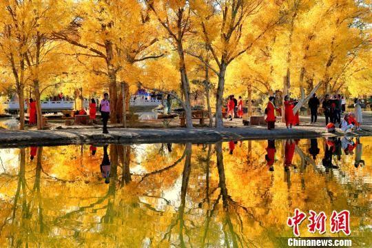 图为甘肃酒泉市金塔沙漠胡杨林景。(资料图) 杨志彬 摄