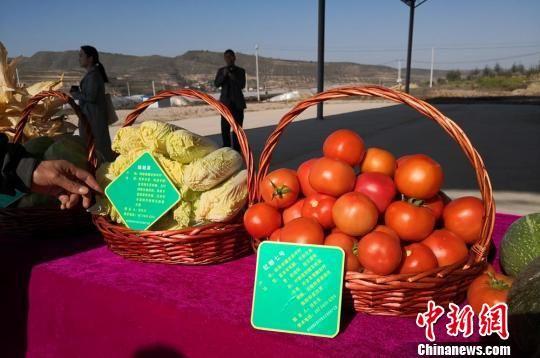 �D�轫n集�袁家坪村蔬菜�N植基地展示的蔬菜。 杜萍 �z