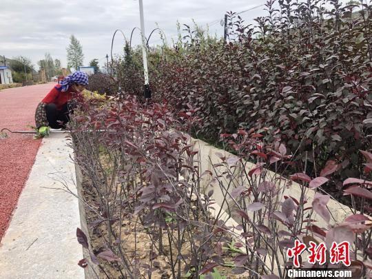 作为全国妇联定点扶贫示范基地,漳县贵清山植物园通过流转土地带动、务工带动、培训带动,帮助了上百名贫困妇女增收。 徐雪 摄