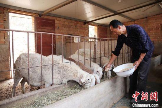 �⒈M��o羊只添精料。(�Y料�D) �P小美 �z