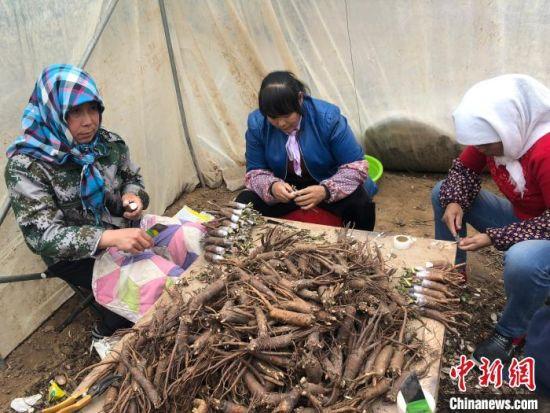 """甘肃省贫困地区妇女在当地的""""巾帼扶贫车间""""就业增收。(资料图) 徐雪 摄"""