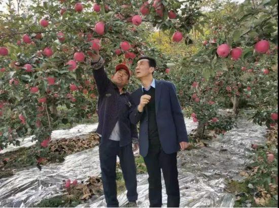 赵绿利(左)向税务驻村干部介绍苹果长势
