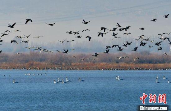 """黑河湿地成候鸟""""乐园""""。 郑耀德 摄"""