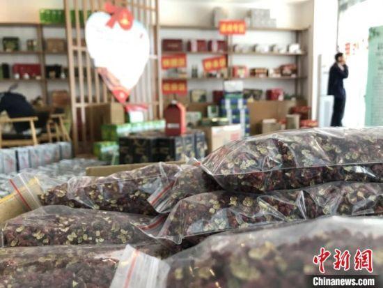 图为宕昌县种植的花椒。(资料图) 闫姣 摄