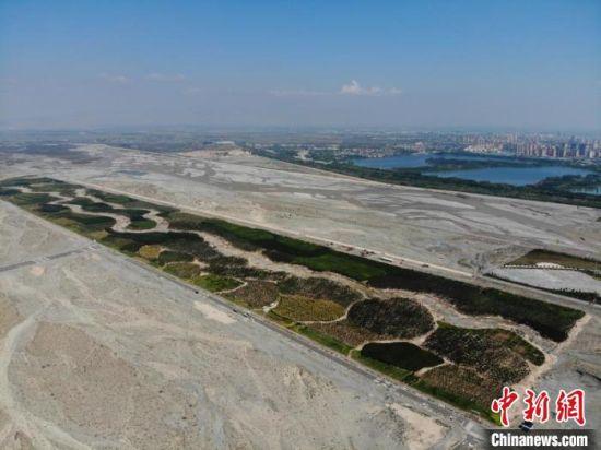 """图为航拍镜头下的甘肃张掖黑河防护林工程如""""绿色长城""""。 杨艳敏 摄"""