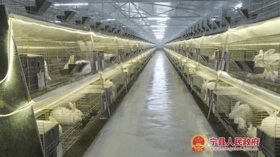 宁县:合作社领跑产业发展 贫困