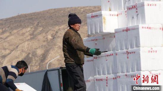 务工者搬运从甘肃省外运送来的蔬菜。 魏建军 摄