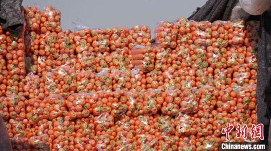 """高原夏菜园区""""三分之一""""的流动储备原则,确保了蔬菜质量、新鲜度。 魏建军 摄"""