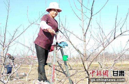 甘肃庆阳市西峰区温泉镇何坳村妇女在果园劳作。