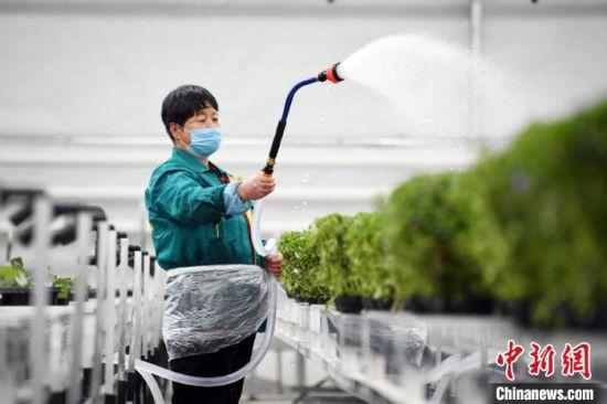 图为工作人员为花卉苗木浇水。 丁凯 摄