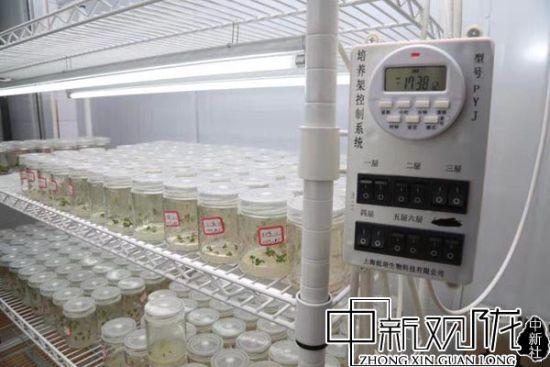 """定西市农科院""""定西-福州草莓培育综合实验室"""" (资料图)"""