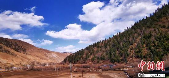 甘肃藏区牧民增收添新径:高原中药材走俏国际市场