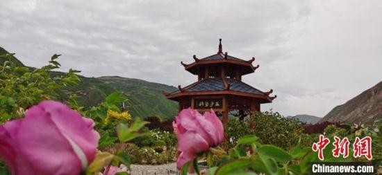 五月中旬,漳县贵清山植物园。 魏建军 摄