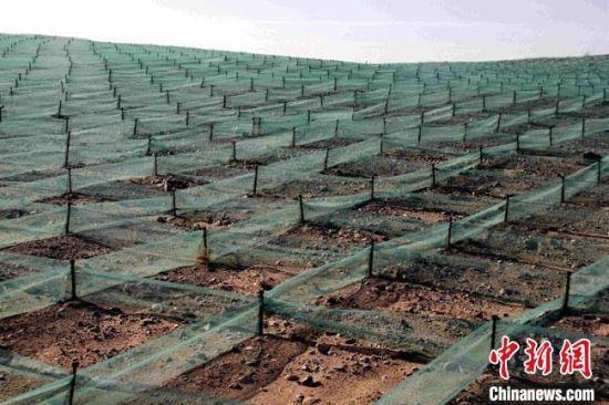 图为金塔县治沙前沿一望无际的防风固沙网。(资料图)金塔县委宣传部供图