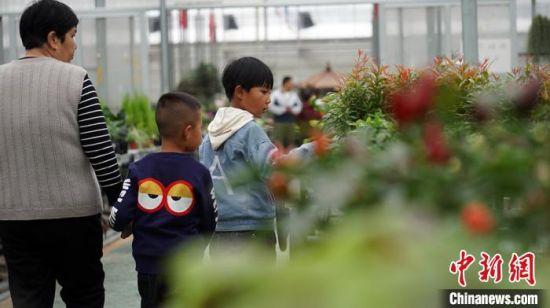 图为游客观赏花卉。 魏建军 摄