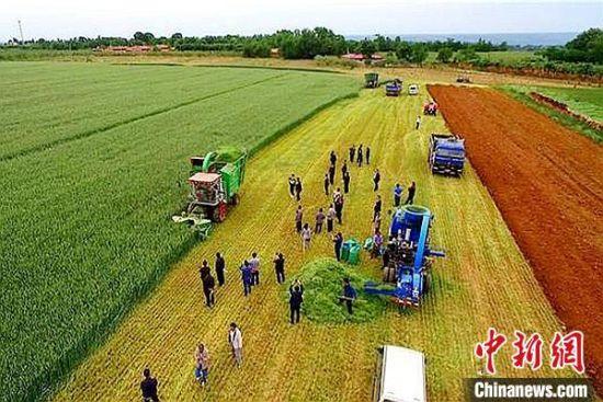 图为陇东地区收割麦田。(资料图)甘肃农业大学供图