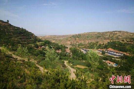 图为6月初,甘肃平凉市境内黄土塬上郁郁葱葱。 冯志军 摄