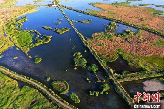 高台县黑河湿地国家级自然保护区总面积2.95万公顷,占张掖市国家级自然保护区总面积的71.57%,保护区内水域、沼泽、滩涂星罗棋布,湿地类型多样,资源丰富。 郑耀德 摄