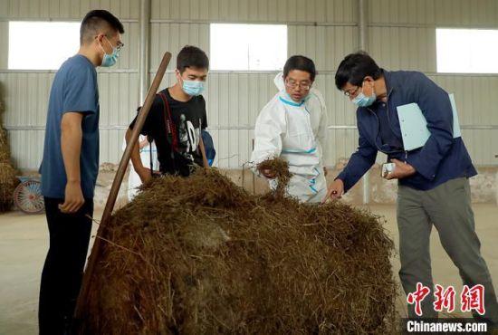环县邀请的专家与庆阳伟赫乳业毛井奶山羊养殖基地工作人员交流饲料配制。 陈飞 摄